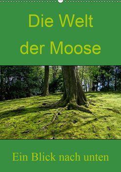 Die Welt der Moose. Ein Blick nach unten (Wandkalender 2019 DIN A2 hoch) von Lewald,  Dominik