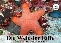 Die Welt der Riffe. Seesterne, Korallen, Anemonen (Wandkalender 2019 DIN A2 quer) von Stanzer,  Elisabeth