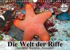 Die Welt der Riffe. Seesterne, Korallen, Anemonen (Wandkalender 2019 DIN A4 quer) von Stanzer,  Elisabeth