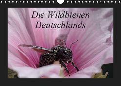 Die Wildbienen Deutschlands (Wandkalender 2019 DIN A4 quer) von Everaars,  Jeroen