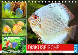 Diskusfische. Die bezaubernden Lieblinge vieler Aquarianer (Tischkalender 2021 DIN A5 quer) von Hurley,  Rose