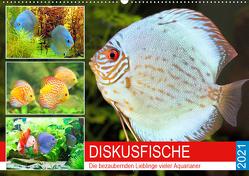 Diskusfische. Die bezaubernden Lieblinge vieler Aquarianer (Wandkalender 2021 DIN A2 quer) von Hurley,  Rose