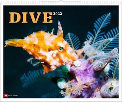 Dive 2022