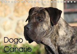 Dogo Canario (Tischkalender 2019 DIN A5 quer) von Wobst,  Petra