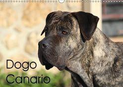 Dogo Canario (Wandkalender 2019 DIN A3 quer) von Wobst,  Petra