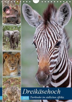 Dreikäsehoch – Tierkinder im südlichen Afrika (Wandkalender 2019 DIN A4 hoch) von Woyke,  Wibke