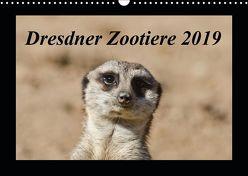 Dresdner Zootiere 2019 (Wandkalender 2019 DIN A3 quer) von Weirauch,  Michael