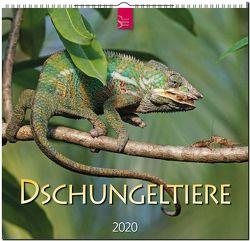 Dschungeltiere von Redaktion Verlagshaus Würzburg,  Bildagentur
