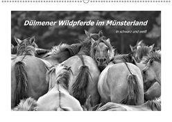 Dülmener Wildpferde im Münsterland in schwarz und weiß (Wandkalender 2019 DIN A2 quer) von Hackstein,  Bettina