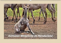Dülmener Wildpferde im Münsterland (Wandkalender 2018 DIN A2 quer) von Hackstein,  Bettina