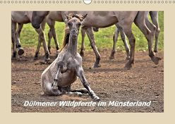Dülmener Wildpferde im Münsterland (Wandkalender 2018 DIN A3 quer) von Hackstein,  Bettina