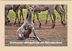 Dülmener Wildpferde im Münsterland (Wandkalender 2019 DIN A2 quer) von Hackstein,  Bettina
