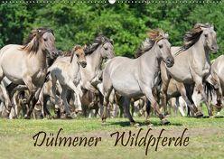Dülmener Wildpferde (Wandkalender 2019 DIN A2 quer) von Menden,  Katho