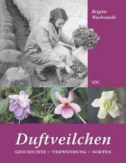 Duftveilchen in europäischen Gärten von Wachsmuth,  Brigitte