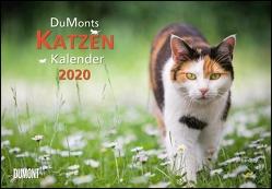 DuMonts Katzenkalender 2020 – Broschürenkalender – Wandkalender – mit Schulferienterminen – Format 42 x 29 cm von DUMONT Kalenderverlag, Jorjan,  Jette