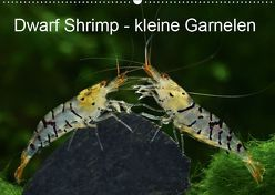 Dwarf Shrimps – kleine Garnelen (Wandkalender 2019 DIN A2 quer) von Pohlmann,  Rudolf