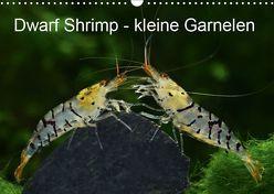 Dwarf Shrimps – kleine Garnelen (Wandkalender 2019 DIN A3 quer) von Pohlmann,  Rudolf