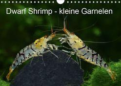Dwarf Shrimp – kleine Garnelen (Wandkalender 2019 DIN A4 quer) von Pohlmann,  Rudolf