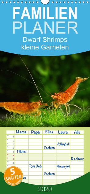 Dwarf Shrimps – kleine Garnelen – Familienplaner hoch (Wandkalender 2020 , 21 cm x 45 cm, hoch) von Pohlmann,  Rudolf