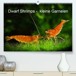 Dwarf Shrimps – kleine Garnelen (Premium, hochwertiger DIN A2 Wandkalender 2020, Kunstdruck in Hochglanz) von Pohlmann,  Rudolf