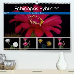 Echinopsis Hybriden. Ein stachliger Traum (Premium, hochwertiger DIN A2 Wandkalender 2020, Kunstdruck in Hochglanz) von Gierok,  Steffen