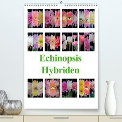 Echinopsis Hybriden (Premium, hochwertiger DIN A2 Wandkalender 2020, Kunstdruck in Hochglanz) von Gierok,  Steffen