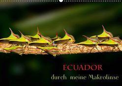 Ecuador durch meine Makrolinse (Wandkalender 2019 DIN A2 quer) von Schulz,  Eerika