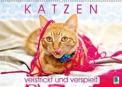 Edition lustige Tiere: Katzen – verstrickt und verspielt (Wandkalender 2018 DIN A2 quer) von CALVENDO,  k.A.