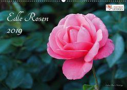 Edle Rosen (Wandkalender 2019 DIN A2 quer) von Rohwer,  Klaus