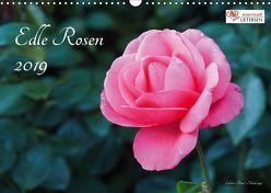 Edle Rosen (Wandkalender 2019 DIN A3 quer) von Rohwer,  Klaus