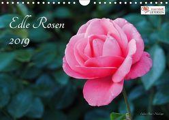 Edle Rosen (Wandkalender 2019 DIN A4 quer) von Rohwer,  Klaus