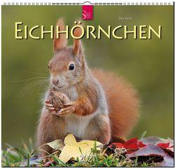 Eichhörnchen von Meier,  Tine