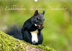 Eichhörnchen – die kleinen Nussknacker (Wandkalender 2020 DIN A3 quer) von Holtz,  Alena