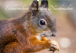 Eichhörnchen – die süßen Nussknacker (Wandkalender 2020 DIN A2 quer) von Holtz,  Alena
