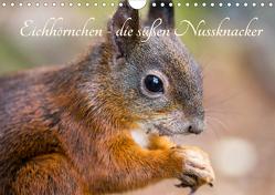 Eichhörnchen – die süßen Nussknacker (Wandkalender 2020 DIN A4 quer) von Holtz,  Alena