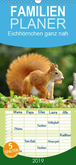 Eichhörnchen ganz nah – Familienplaner hoch (Wandkalender 2019 , 21 cm x 45 cm, hoch) von Jazbinszky,  Ivan