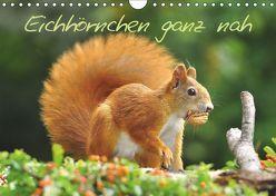 Eichhörnchen ganz nah (Wandkalender 2019 DIN A4 quer) von Jazbinszky,  Ivan