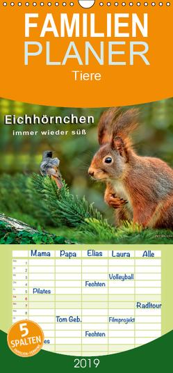 Eichhörnchen – immer wieder süß – Familienplaner hoch (Wandkalender 2019 , 21 cm x 45 cm, hoch) von Roder,  Peter
