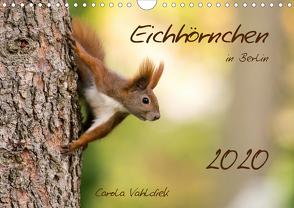 Eichhörnchen in Berlin (Wandkalender 2020 DIN A4 quer) von Vahldiek,  Carola