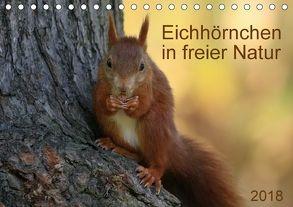 Eichhörnchen in freier Natur (Tischkalender 2018 DIN A5 quer) von SchnelleWelten