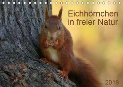 Eichhörnchen in freier Natur (Tischkalender 2019 DIN A5 quer) von SchnelleWelten