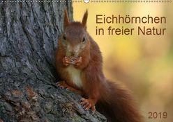 Eichhörnchen in freier Natur (Wandkalender 2019 DIN A2 quer) von SchnelleWelten