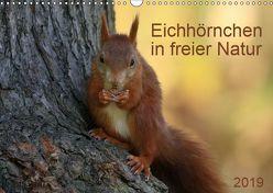 Eichhörnchen in freier Natur (Wandkalender 2019 DIN A3 quer) von SchnelleWelten
