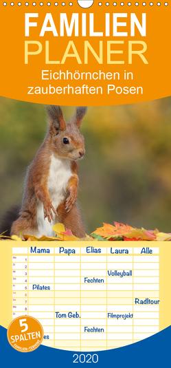 Eichhörnchen in zauberhaften Posen – Familienplaner hoch (Wandkalender 2020 , 21 cm x 45 cm, hoch) von Meier,  Tine