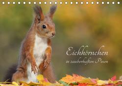Eichhörnchen in zauberhaften Posen (Tischkalender 2019 DIN A5 quer) von Meier,  Tine