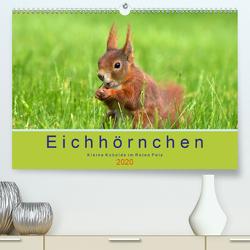Eichhörnchen – Kleine Kobolde im Roten Pelz (Premium, hochwertiger DIN A2 Wandkalender 2020, Kunstdruck in Hochglanz) von Brackhan,  Margret