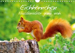 Eichhörnchen-Nussknacker ganz nah (Wandkalender 2020 DIN A4 quer) von Jazbinszky,  Ivan