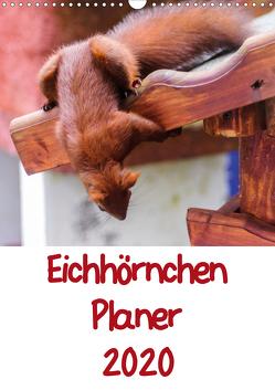 Eichhörnchen Planer 2020 (Wandkalender 2020 DIN A3 hoch) von Jaeger,  Carsten