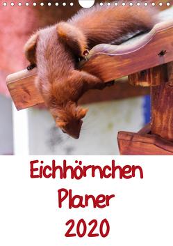 Eichhörnchen Planer 2020 (Wandkalender 2020 DIN A4 hoch) von Jaeger,  Carsten