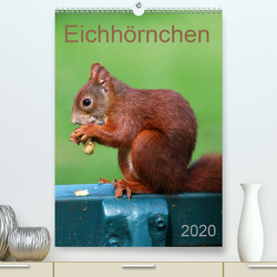 Eichhörnchen (Premium, hochwertiger DIN A2 Wandkalender 2020, Kunstdruck in Hochglanz) von SchnelleWelten